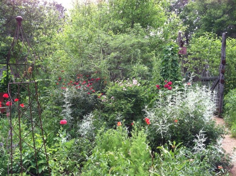 Ellen Zimmerman's garden